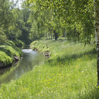 Course of a stream, bank with a deep green degree. Trees line the bank on the left and right.