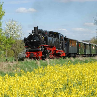 A steam locomotive drives past a flowering rapeseed field.